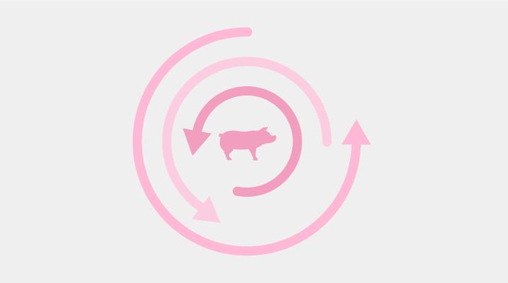 La importancia del sector porcino en España
