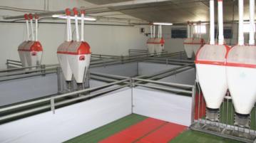 producción porcino español