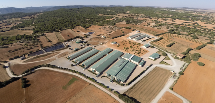 El sector porcino español es referente internacional en sostenibilidad, bienestar animal y responsabilidad social