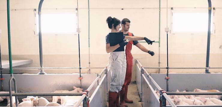 """Las granjas de porcino avalarán su trabajo con el sello """"Bienestar Animal Certificado"""""""