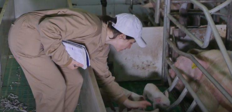 Sector porcino: recortando la brecha de género en España